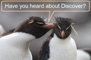 "One penguin asks another, ""Have you heard about Discover?"""