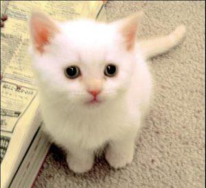Puzzled Kitten